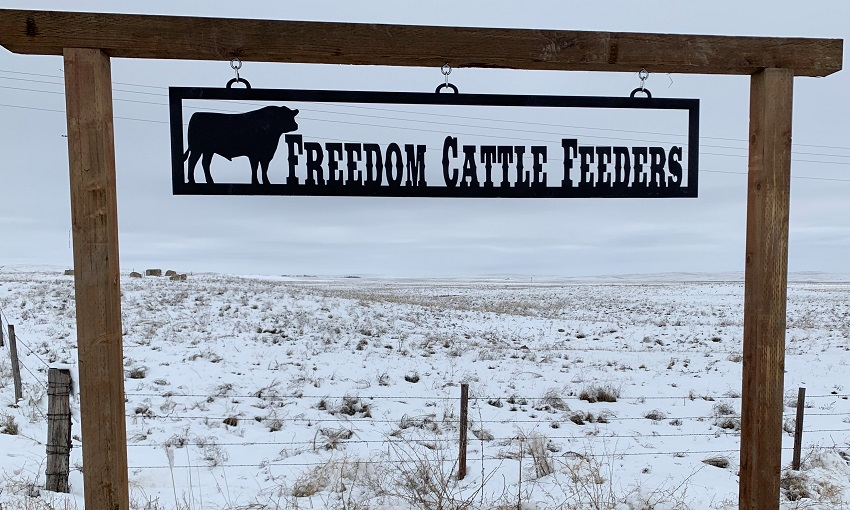 Freedom Cattle Feeders resized
